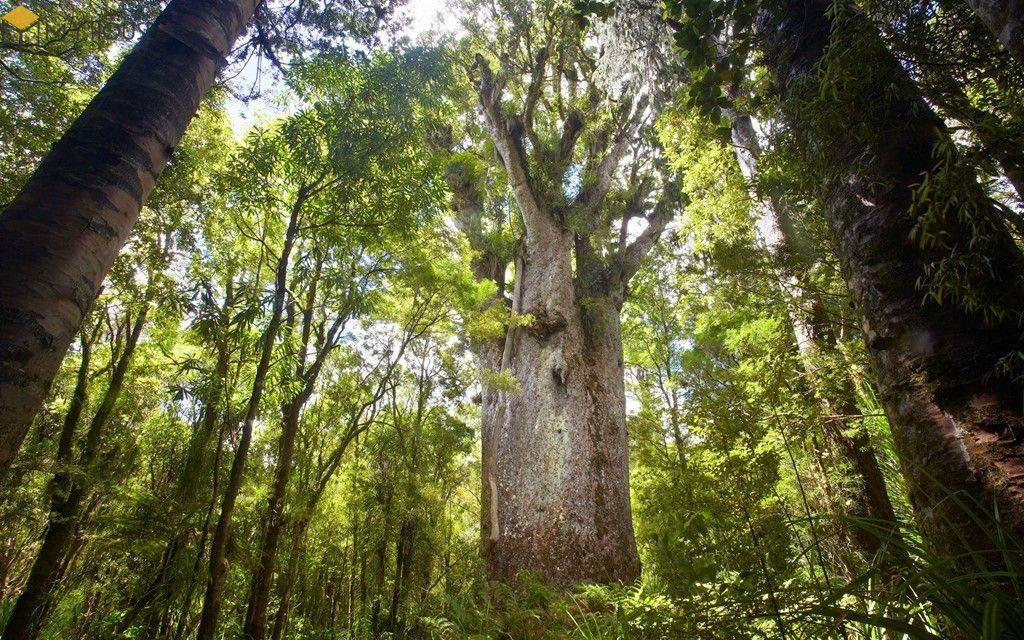 Hình ảnh cây gỗ trai