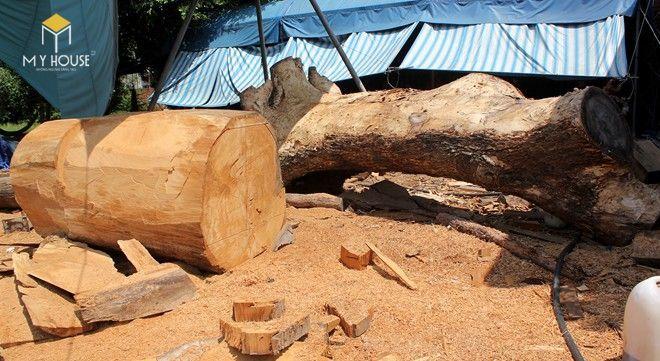 Sao xanh là loại gỗ thuộc nhóm III trong những loại gỗ quý