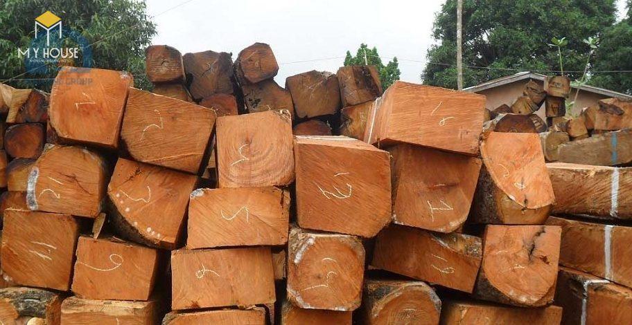Cây sao là một loài thực vật họ dầu, thân lấy gỗ