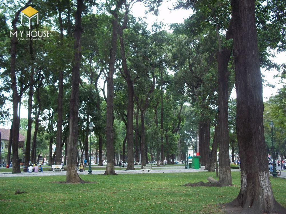 Cây gỗ sao có thân thẳng, thuôn dài, thân cây có những nứt dọc theo thớ