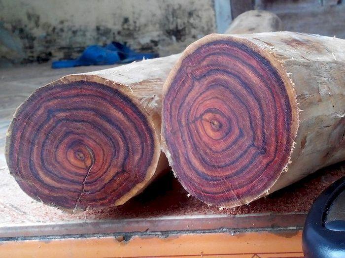 Đặc điểm nhận biết gỗ sưa đỏ