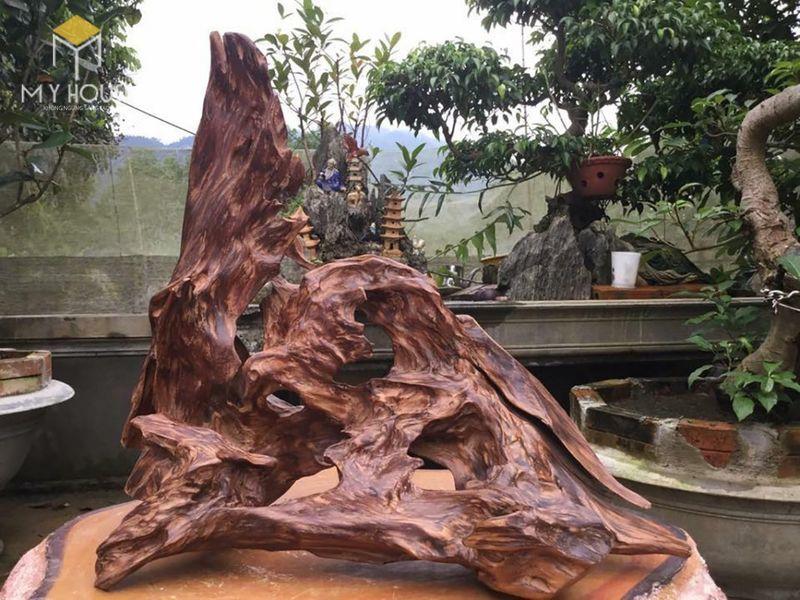 Cây gỗ ngọc am là một loại cây thân gỗ