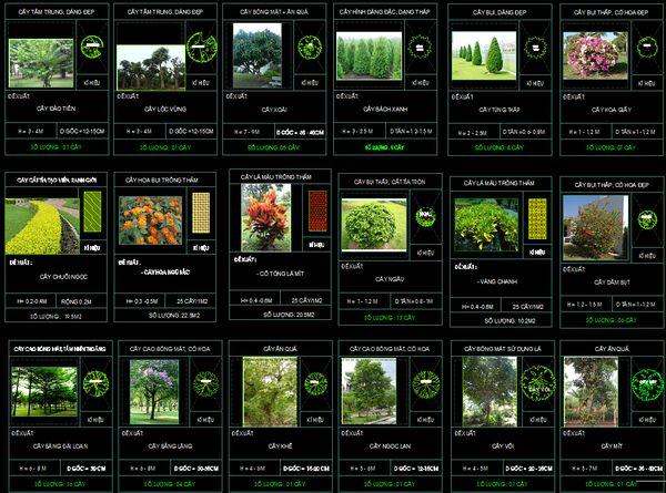 Bản vẽ thiết kế sân vườn tăng giá trị thẩm mĩ tổng thể